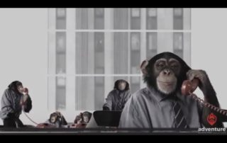 Chimpanzees in the Office_Thumb